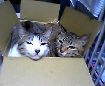 A_box_of_cats